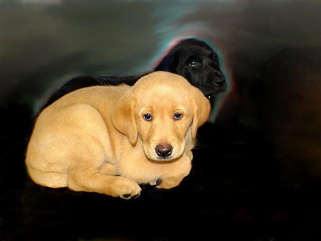 http://www.renegade-servicedog.org/Images--Year2009/BuWebImage--061.jpg