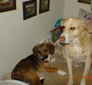 BUCHANANFPC PHOTO (RENEGADE AND RUFUSS, CANINE FRIENDS)